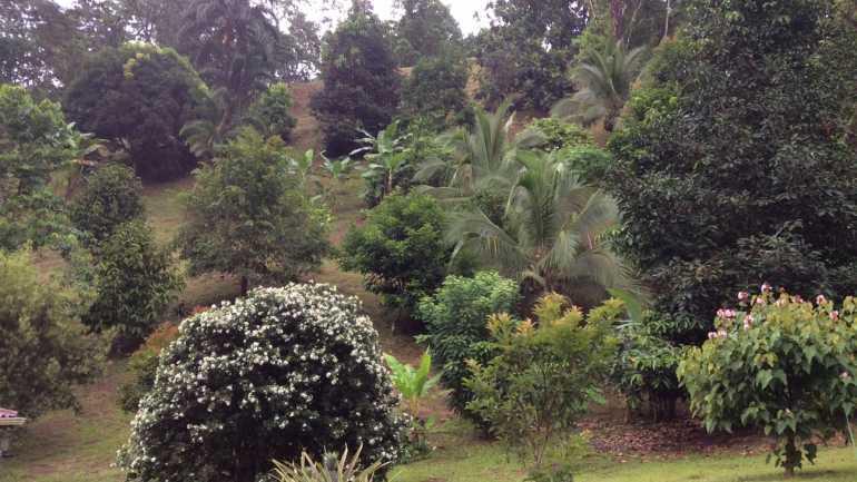 Cabinas Tropical